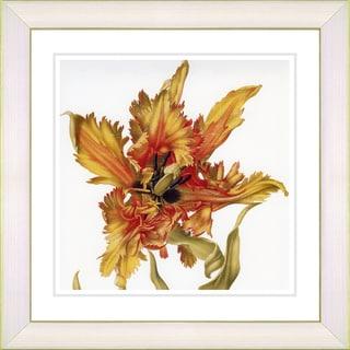 Studio Works Modern 'Vintage Botanical #27' Framed Print