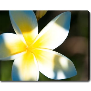 'Frangipani in Hawaii' Gallery-wrapped Canvas Art