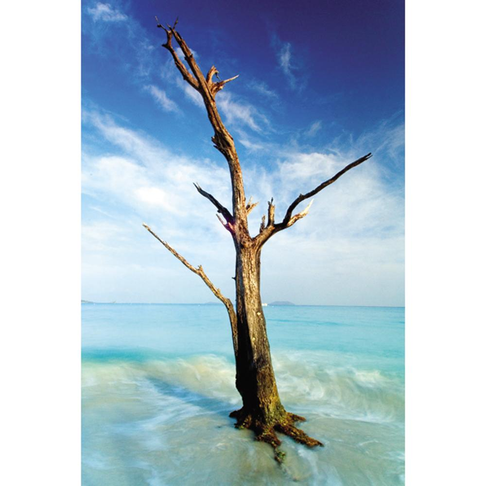 Nathan Lovas 'Cinnamon Bay Tree' Gallery-wrapped Canvas Art