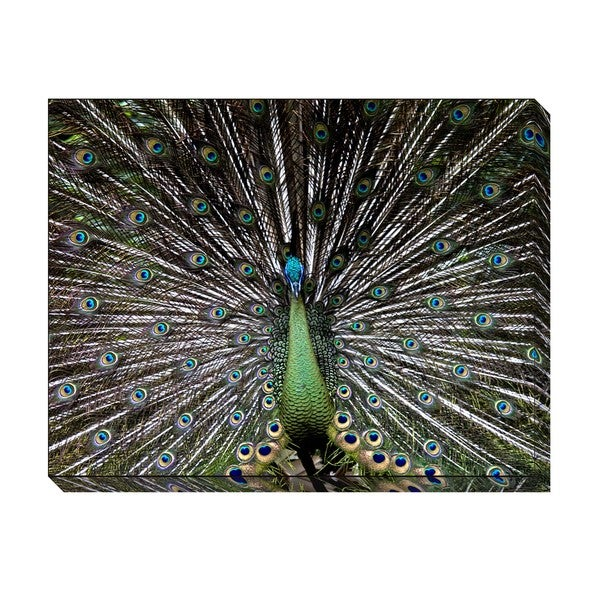 Gallery Direct The Peacock Oversized Gallery Wrapped Canvas