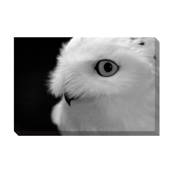 Gallery Direct Snow White Owl Oversized Gallery Wrapped Canvas