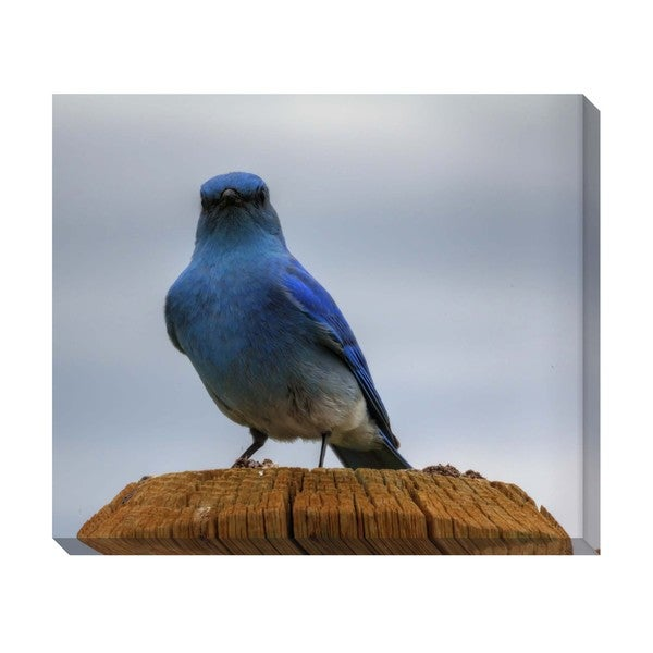 Gallery Direct Mountain Blue Bird Oversized Gallery Wrapped Canvas