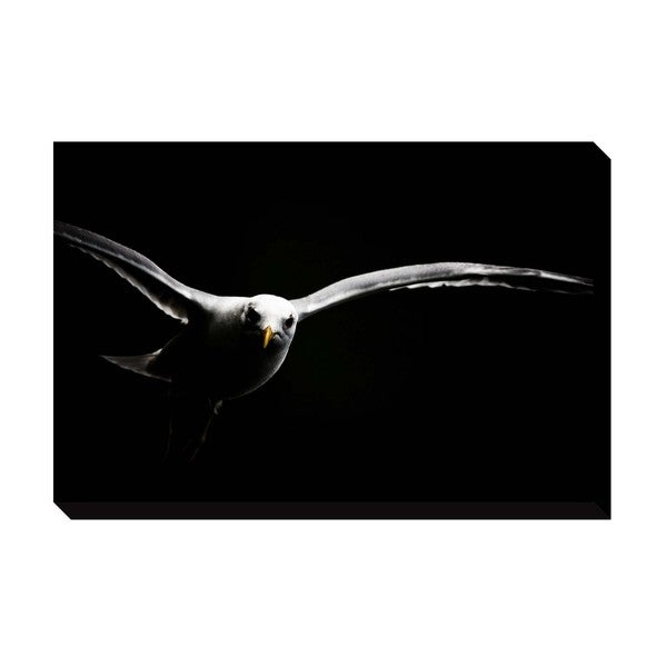 Gallery Direct Gull Oversized Gallery Wrapped Canvas
