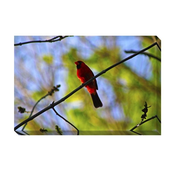 Gallery Direct Red Bird Oversized Gallery Wrapped Canvas