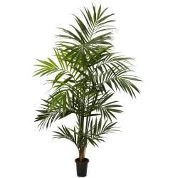 7 ft Kentia Palm Silk Tree - Thumbnail 0