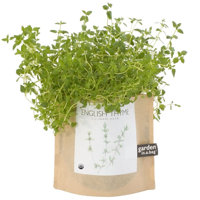Garden-in-a-Bag Herb Collection Organic English Thyme