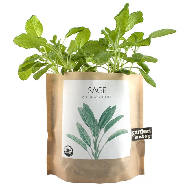 Garden-in-a-Bag Herb Collection Organic Sage