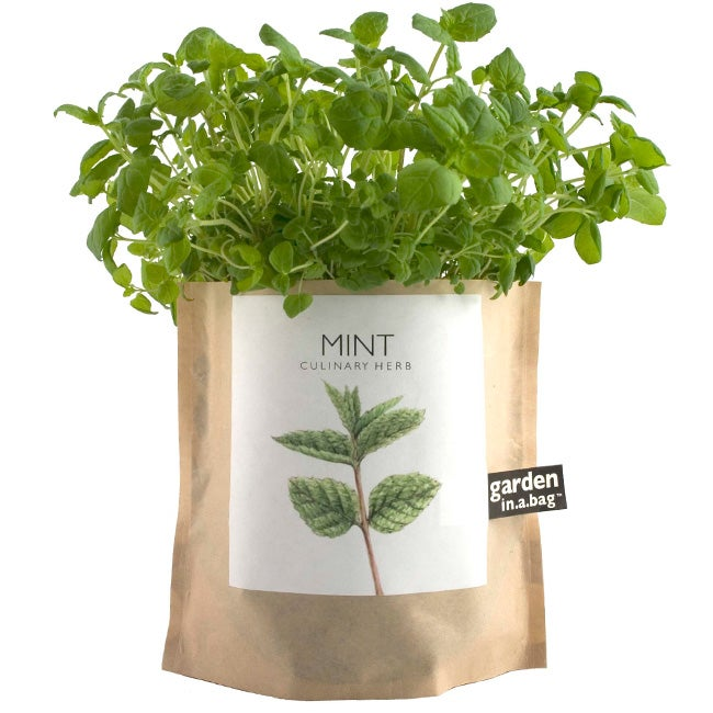 Garden-in-a-Bag Herb Collection Organic Mint