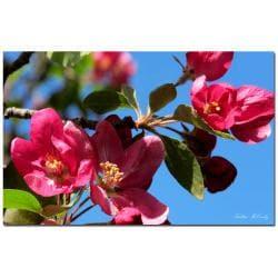 Kathie McCurdy 'Apple Blossoms' Canvas Art