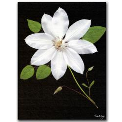 Kathie McCurdy 'Star' Canvas Art