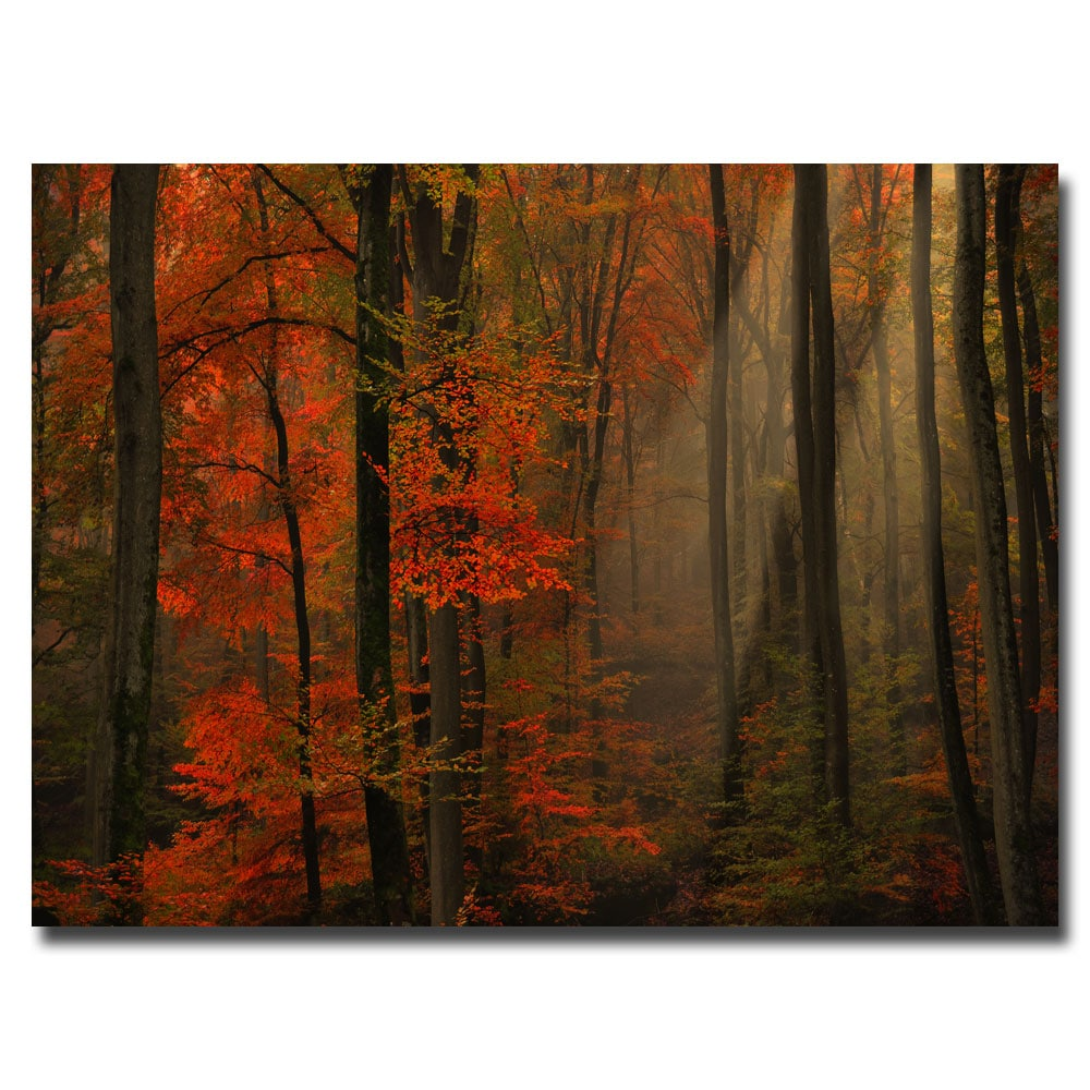 Philippe Sainte-Laudy 'Poetry of Colors' Canvas Art