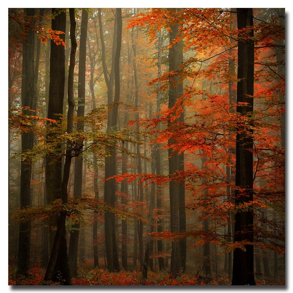 Philippe Sainte-Laudy 'Fall' Canvas Art