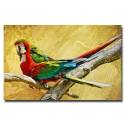 Lois Bryan 'Kissing Macaws' Canvas Art - Thumbnail 0