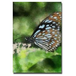Lois Bryan 'Butterfly in Blue' Canvas Art