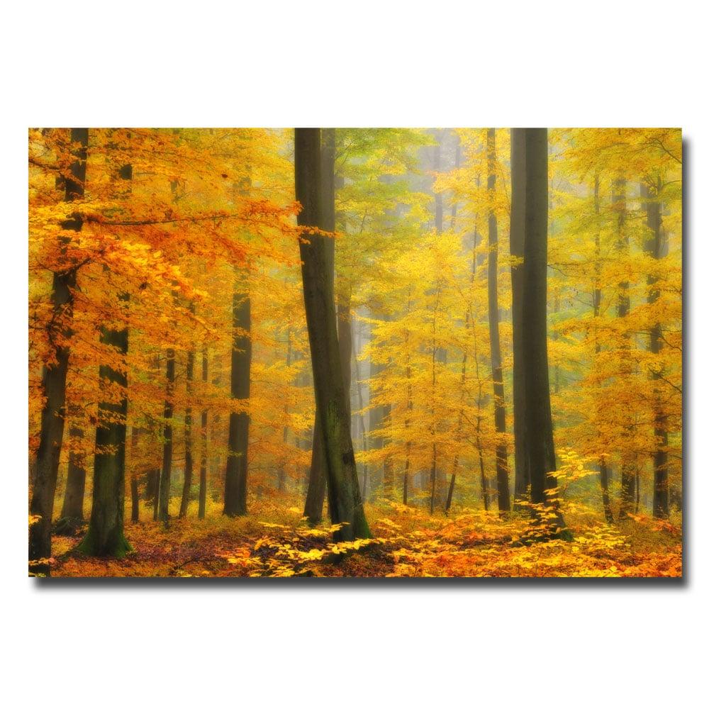 Philippe Sainte-Laudy 'Orton Forest' Canvas Art