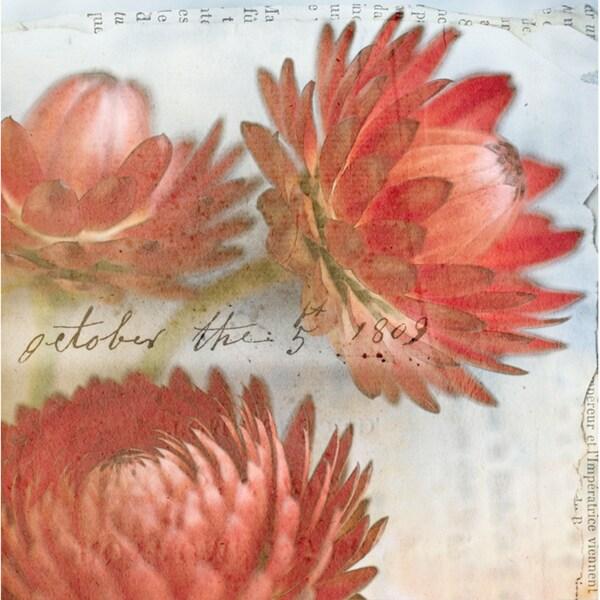Red Strawflower I  Paper Print (Unframed)