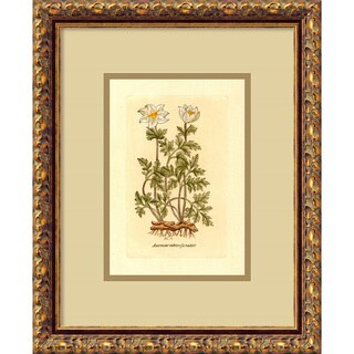 framed art print tuberosa radiceu0027 13 x