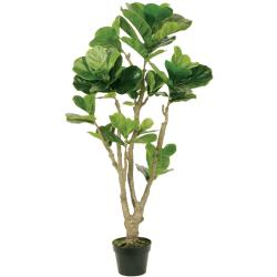 4-foot Tall Fiddle Leaf with Pot