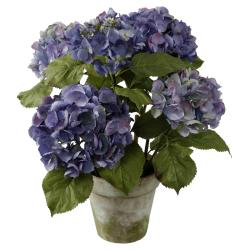 Hydrangea 28-inch Tall Potted Plant