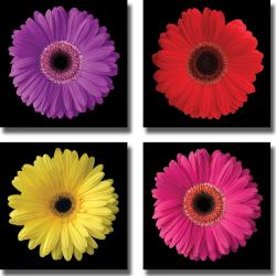 Jim Christensen 'Gerbera Daisy Flower' 4-piece Canvas Art Set