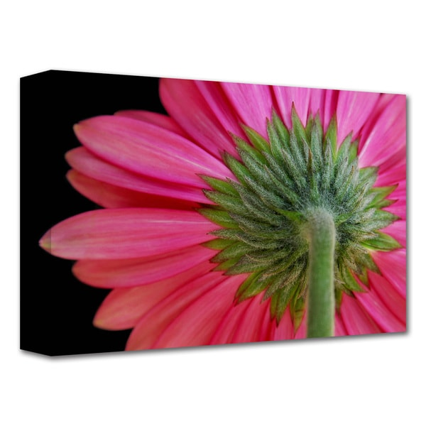 Dan Holm 'Shy Flower' Gallery-Wrapped Canvas