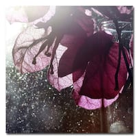 Beata Czyzowska 'Purple Glory' Canvas Art