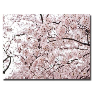 Ariane Moshayedi 'Cherry Blossoms' Canvas Art