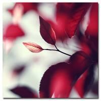 Beata Czyzowska Young 'When Spring is Red' Canvas Art