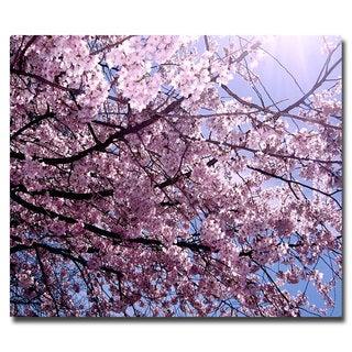 Ariane Moshayedi 'Cherry Blossom Flare' Canvas Art