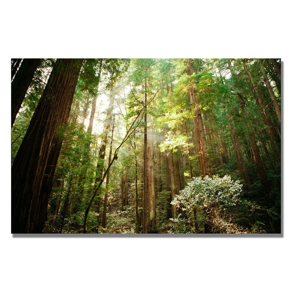Ariane Moshayedi 'Muir Woods' Canvas Art