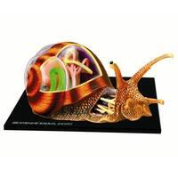 4D Snail Anatomy Model Kit