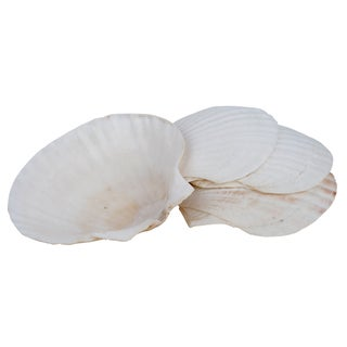 Miu France Natural Baking Shells