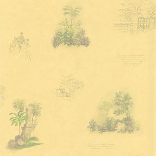 Brewster Camel Tropical Toile Wallpaper