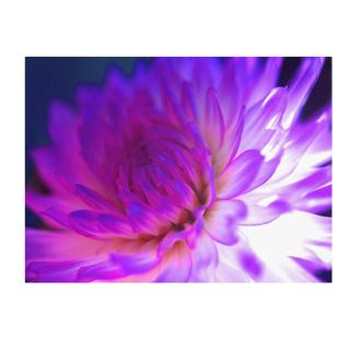 Kathy Yates 'Mod Dahlia' Canvas Art