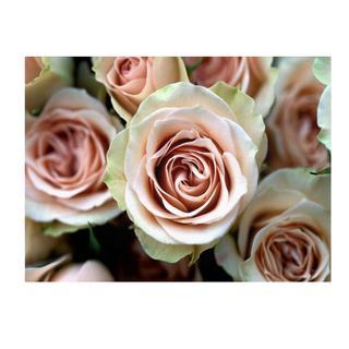 Kathy Yates 'Pale Pink Roses' Canvas Art