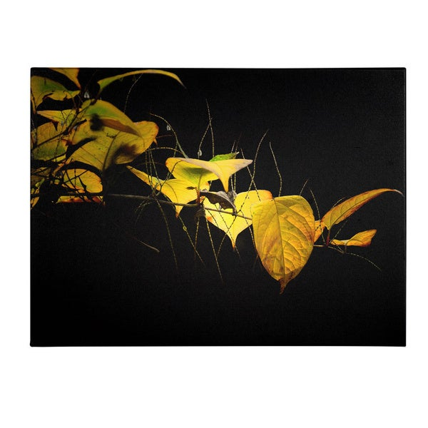 Philippe Sainte-Laudy 'Golding' Canvas Art - Multi