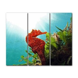 Chris Doherty 'Seahorse' Acrylic Art 3-piece Set
