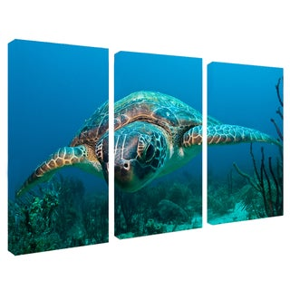 Chris Doherty 'Turtle' 3-piece Canvas Art Set