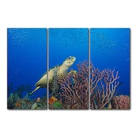 Chris Doherty 'Turtle' 3-piece Gallery-wrapped Canvas Art Set - Blue