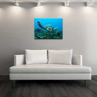 Chris Doherty 'Turtle'  Gallery-wrapped Canvas Art