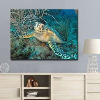 Chris Doherty 'Turtle' 24x32-in Canvas Wall Art
