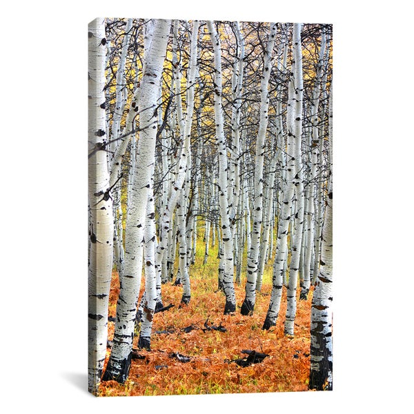 iCanvas Autumn In Aspen' Canvas Print Wall Art