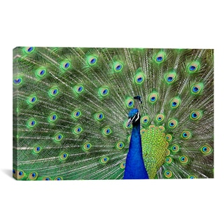 iCanvas 'Peacock Feathers' Canvas Giclee Art Print