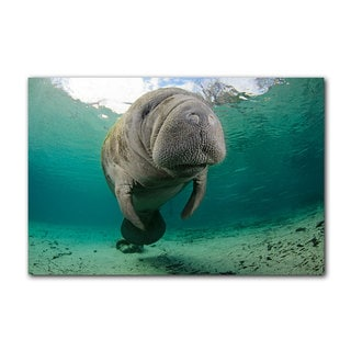 Chris Doherty 'Manatee' Canvas Wall Art