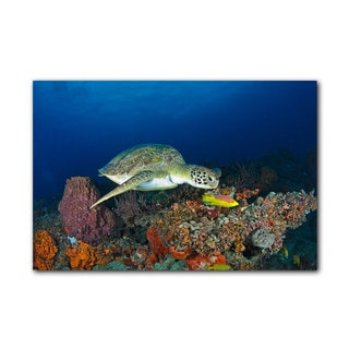 Chris Doherty 'Turtle' Gallery-wrapped Canvas Wall Art