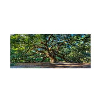 Pierre Leclerc 'Angel Oak Charleston' Canvas Art