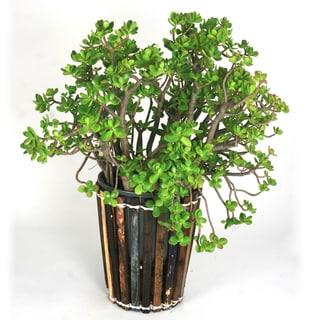 Ecologica Planter Small