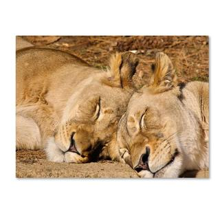 CATeyes 'National Zoo - Lions' Canvas Art