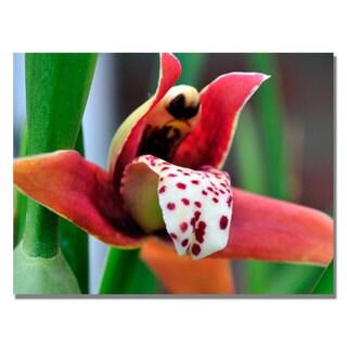 Kurt Shaffer 'Little Red Orchid' Canvas Art