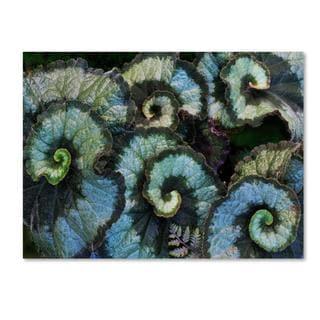 Kurt Shaffer 'Escargot Begonia' Canvas Art